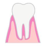 健康な状態の歯と歯ぐき